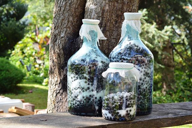 Owoce aronii w butelkach